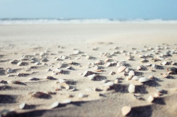 sea-shells-on-beach